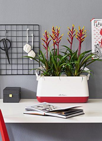 Angebot Lechuza Stores Yula Scarlet Rot Unbepflanzt