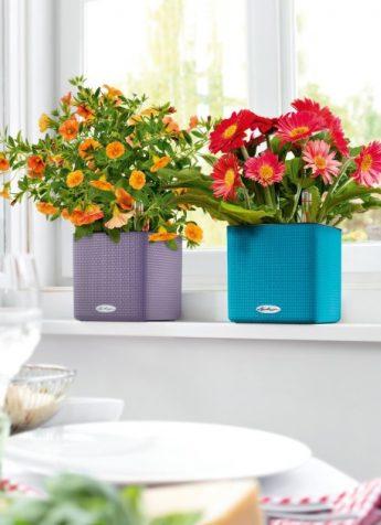 LECHUZA CUBE Color in verschiedenen Farben mit Bewässerungsstick - Sale